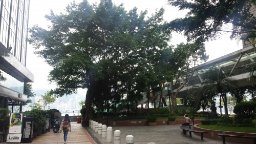 Vi muita área verde por onde andei em Hong Kong. Que maravilha!